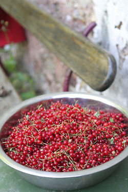 red currants1
