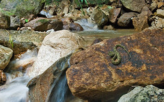 """Malabar- Pit-Viper • <a style=""""font-size:0.8em;"""" href=""""http://www.flickr.com/photos/109145777@N03/13910117882/"""" target=""""_blank"""">View on Flickr</a>"""