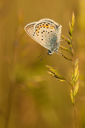 """btfly in the last light • <a style=""""font-size:0.8em;"""" href=""""http://www.flickr.com/photos/22289452@N07/8759141506/"""" target=""""_blank"""">View on Flickr</a>"""