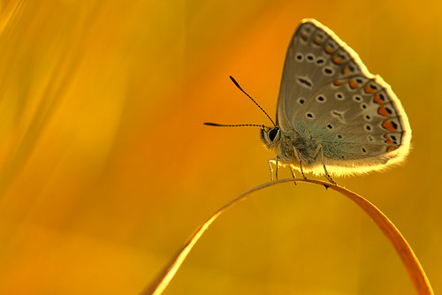 """seated-butterfly • <a style=""""font-size:0.8em;"""" href=""""http://www.flickr.com/photos/22289452@N07/9351544135/"""" target=""""_blank"""">View on Flickr</a>"""