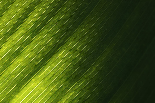 """Leaf in Sidelight • <a style=""""font-size:0.8em;"""" href=""""http://www.flickr.com/photos/22289452@N07/14511124158/"""" target=""""_blank"""">View on Flickr</a>"""
