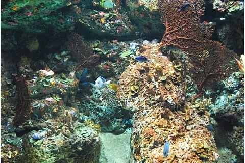 Aquarium Nc Robert F Naples Clu Rhu Chfc Aai Lutcf