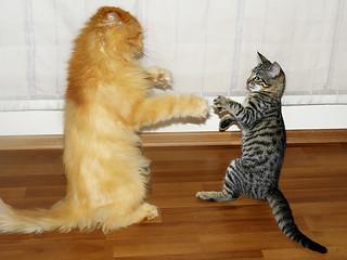 G&M-Kung Fu