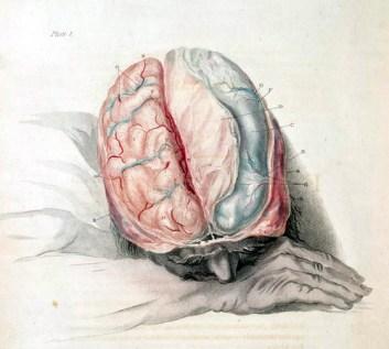 Charles Bell: Anatomy of the Brain, c. 1802