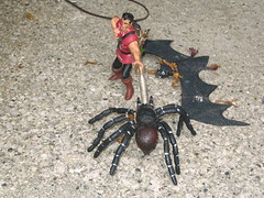 Spider Bat Monster Fight
