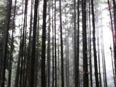Stanley Park Winter Trail Walking