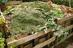 What to Use in Compost