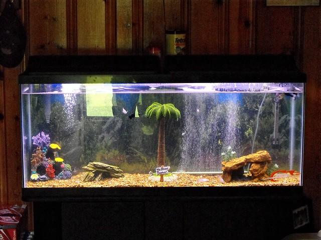 55 gallon fish tank videos member spotlight butterfly for 55 gallon fish tank size