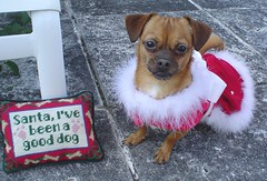 Santa, I've been a good dog