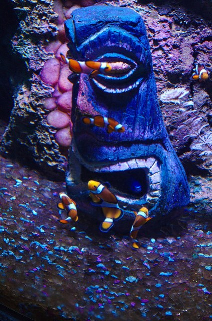 Clown fish and a blue mask