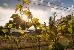 Quidni Estate Winery 71