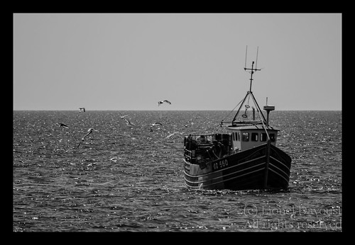 Fishing_boat_on_the_way_home