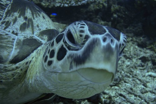 Green turtle at armslength