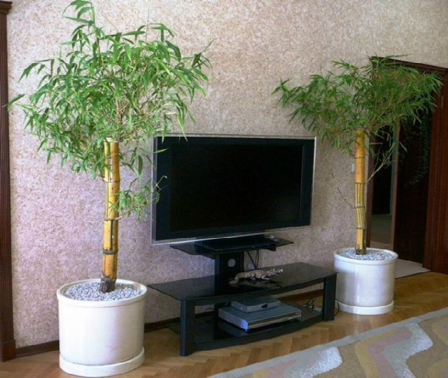 10 plantas que purifican el aire de nuestra casa lo dice - Plantas de interior que purifican el aire ...