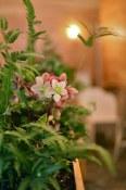 The Blacktail Florist