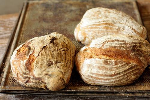 crusty swedish breads