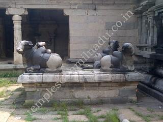 Four nandis in front of Brahma's Idol. Thirumazhapadi Vaithyanathaswamy Temple