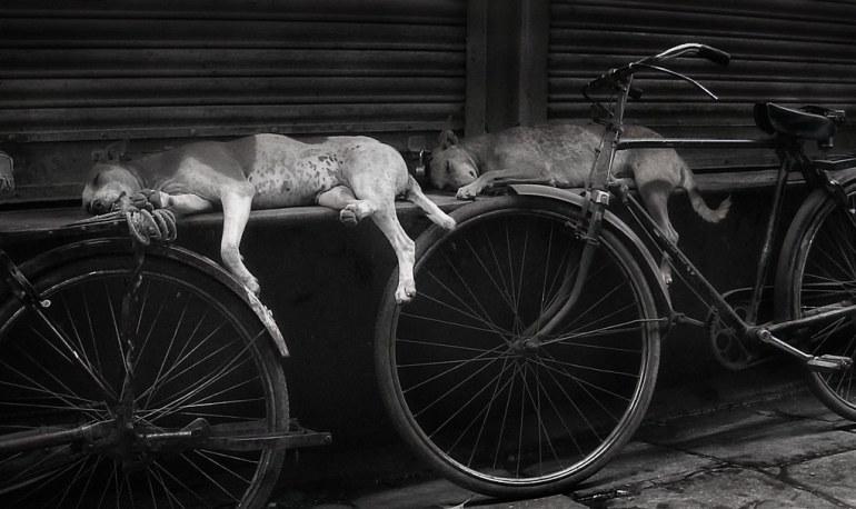 Vida de Bicicletas en la India 9281896812 6b6f0c6d3a b