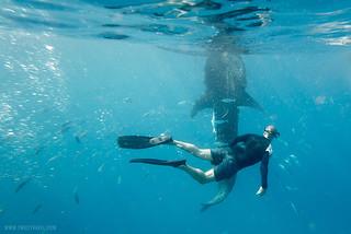Whale Shark Watching in Oslob, Cebu - Plan Your Trip Now