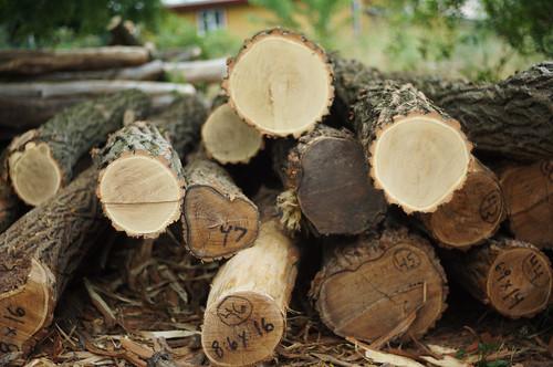 Black Locust Roundwood Timber Frame