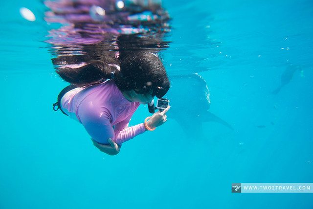 Whaleshark watching, Oslob, Cebu | Two2Travel