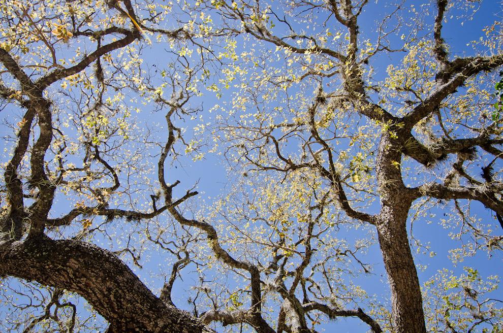 """Vista de los árboles de la reserva ecológica """"Laguna Blanca"""" del Departamento de San Pedro, en el inicio de la primavera. (Elton Núñez)"""