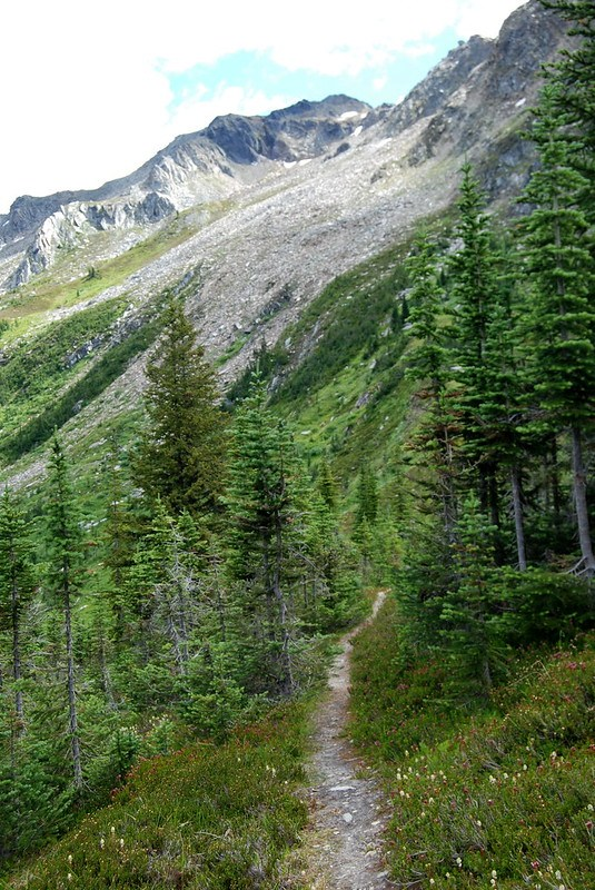 Trail in the saddle of McKirdy Mt.