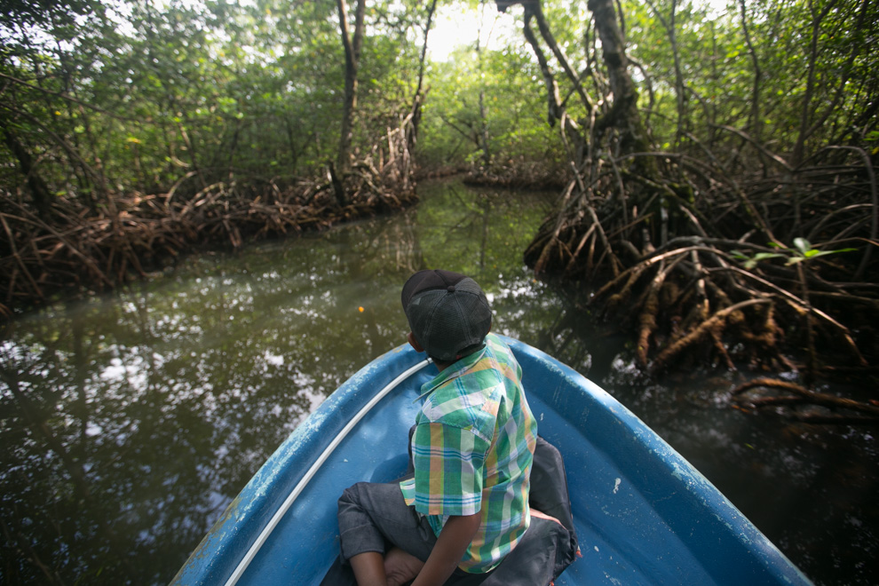 Visitando una de las islas nos adentramos en un manglar. El manglar es considerado a menudo un tipo de biomasa, formado por árboles muy tolerantes a la sal que ocupan la zona intermareal cercana a las desembocaduras de cursos de agua dulce de las costas de latitudes tropicales y subtropicales. Su nombre deriva de los árboles que los forman, los mangles, el vocablo mangle de donde se deriva mangrove (en alemán, francés e inglés) es originalmente guaraní y significa árbol retorcido. (Tetsu Espósito)