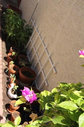 Gardening in August