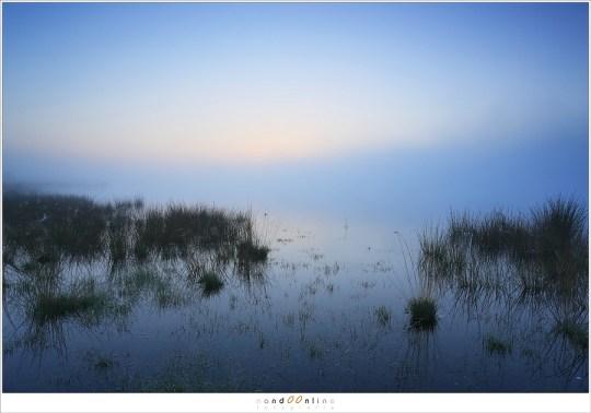 Schemering en de mist