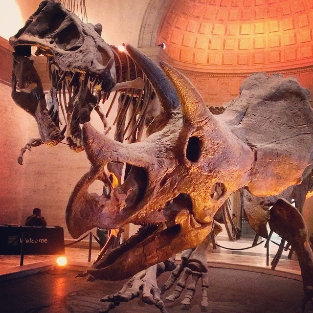 It's like Jurrasic Park without the special effects... #naturalhistorymuseum #dtla
