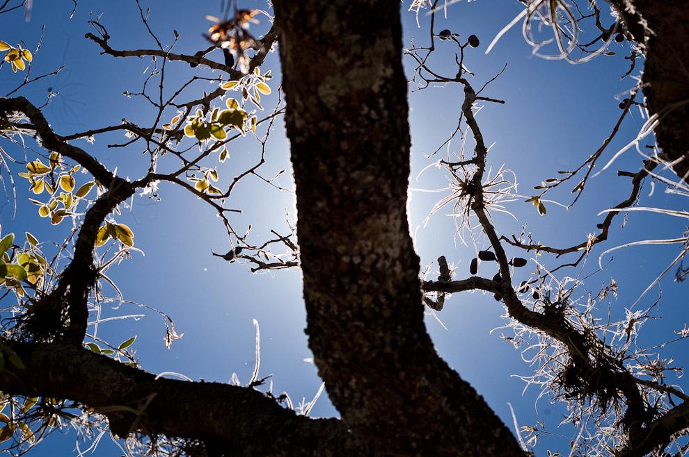 """Varias orquídeas crecen en los árboles del establecimiento ecológico """"Laguna Blanca"""" en el Departamento de San Pedro. (Elton Núñez)"""