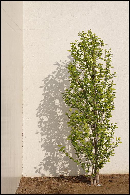 Concrete Plants