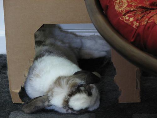 betsy flopped napping (closeup)