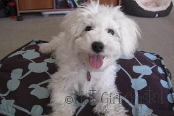 Elphie - 5 Months Old