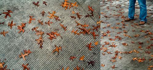 Leaves and Boris Feet