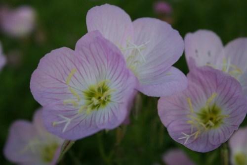 Tempe Spring in bloom