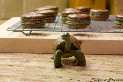 Tortoise Macarons in the making