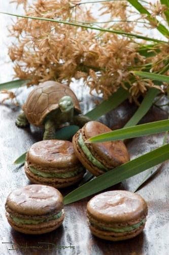 Tortoise Macarons Reunited