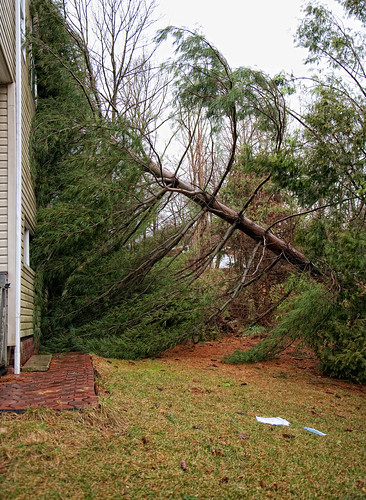 2010 wind storm - tree on house