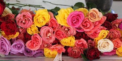 Flowers at Quai St Antoine Food Market, Lyon