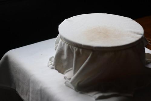 kombucha mushroom covered