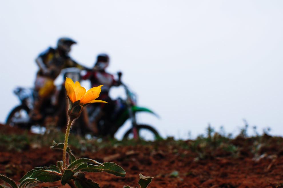 Una solitaria flor se abre paso y florece en un circuito de pruebas de La 2da fecha del campeonato metropolitano de Motocross llevándose a cabo en Setiembre en el MX club de Luque. (Elton Núñez - Luque, Paraguay)