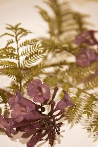 HMNH purple flowers