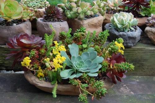 Succulent container.