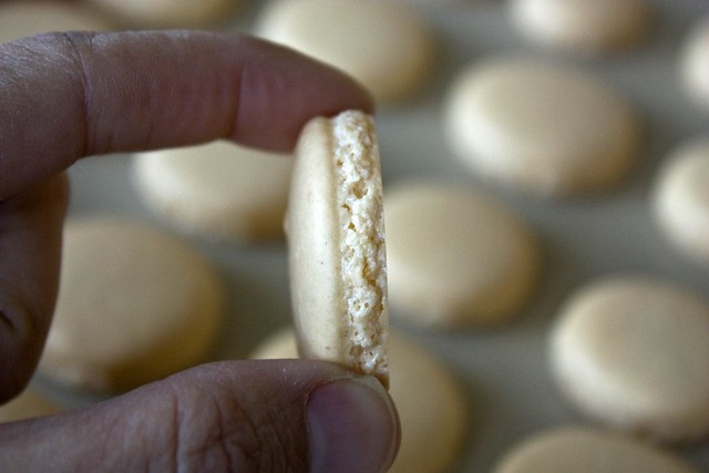 The very coveted Macaron *feet*