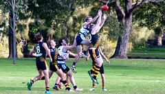 Balmain Tigers v Camden Cats AFL Division1 May 27 2017 00035