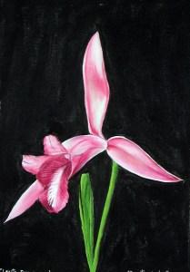 Orquídea(cleiste Paranaenses)