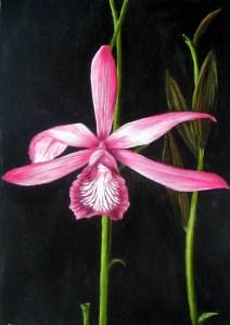 Orquídea (Ephistepium Lucidum)