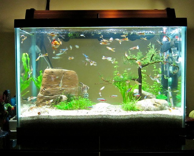 20 gallon aquarium | Explore redtimmy's photos on Flickr. re